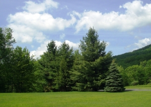 Manor Road Lot 12, Canaan Valley Area