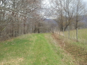 Flat Ridge Farms Lot 19, Canaan Valley Area